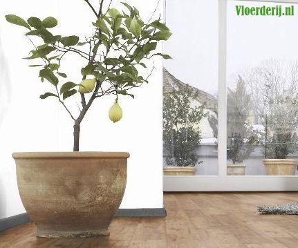 Houten vloer onderhoud gemakkelijk goedkoop vloerderij